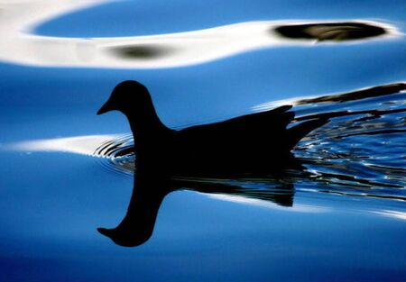 The silhouette of a bird on a lake. Stock Photo
