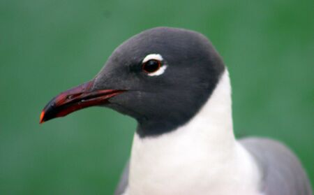 Bird Headshot Banco de Imagens
