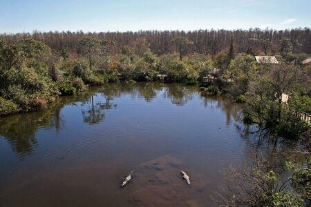 muggy: 2 alligators swimming in a lake