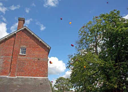 Balloons flying away between a building and trees