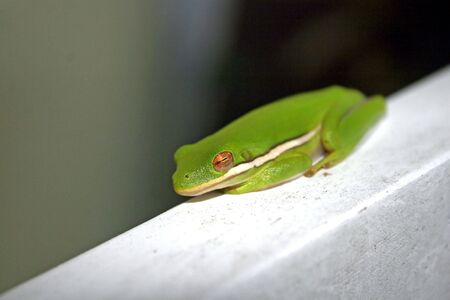 treefrog: A Frog sitting on a piece of wood.