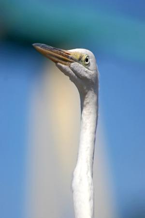 A white bird with a long neck