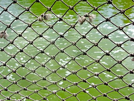 alongside: A pattern of a net alongside a lake.