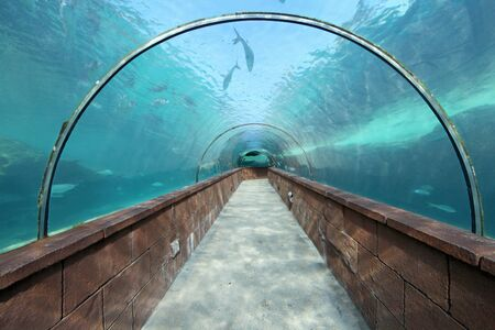 fishtank: Looking through an aquarium tunnel with fish Stock Photo