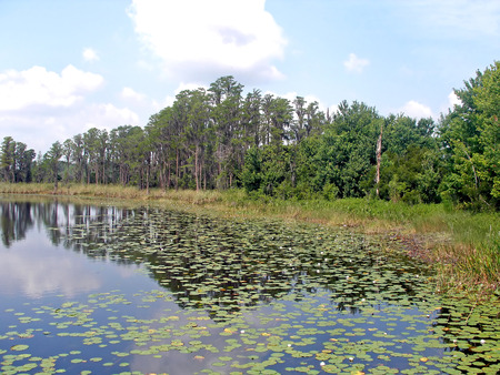 lily pads: Trees and a lake with lily pads.