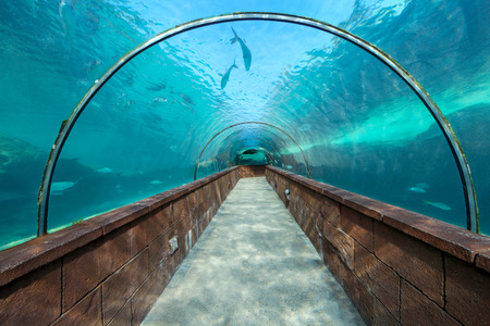 Looking through an aquarium tunnel with fish Stock Photo