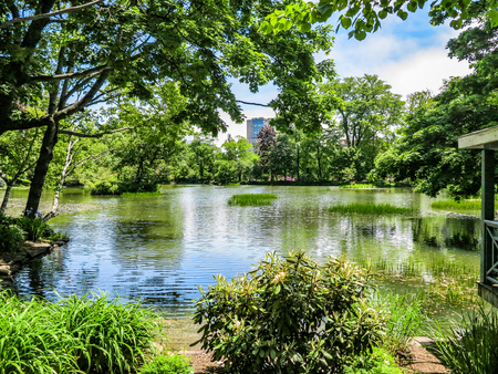 A pond in a park surrounded by trees Stok Fotoğraf