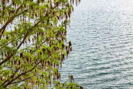 A tree with green and brown leaves over water Stok Fotoğraf