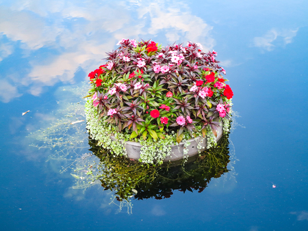 A pot with plants and flowers floating on water