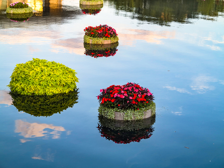 Pots with plants and flowers floating on water