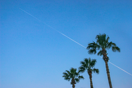 3 palm trees with blue sky and a condensation trail