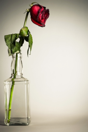vintage parched roses in a glass bottle photo