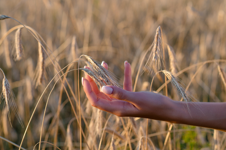 woman holding wheat ears in hand