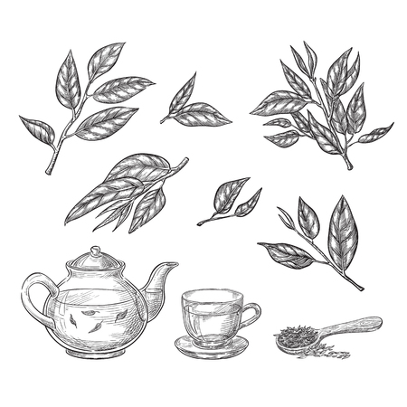 Green tea sketch vector illustration. Leaves, teapot and cup hand drawn isolated design elements. Stock Illustratie