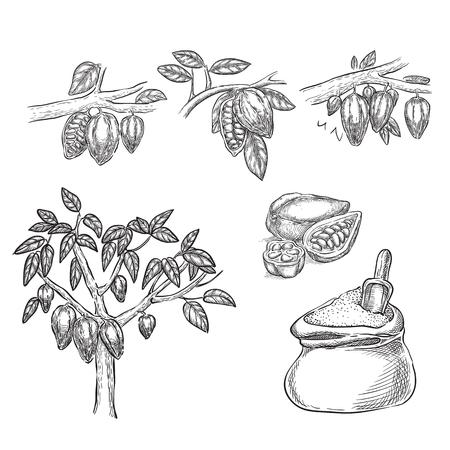 Illustration vectorielle de chocolat croquis. Gousse de cacao sur branche, haricots, arbre, poudre de cacao dessinés à la main des éléments de conception isolés.