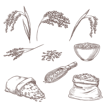 Rice cereal spikelets, grain in sack and porridge in bowl. Vector sketch illustration. Hand drawn isolated design elements.