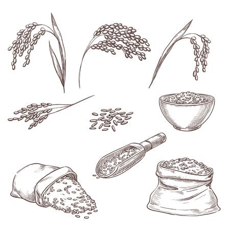 Rijst granen spikelets, graan in zak en pap in kom. Vector schets illustratie. Hand getrokken geïsoleerde ontwerpelementen.