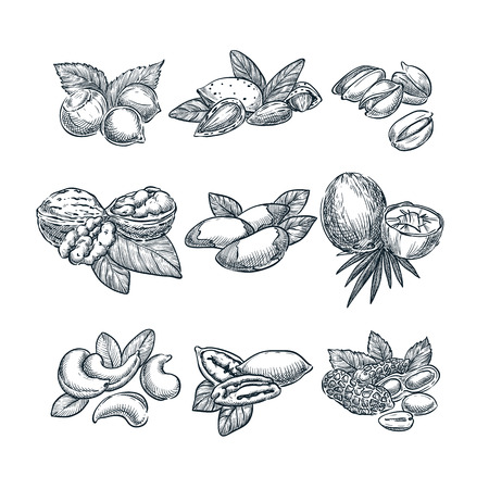 Nuts vector sketch illustration. Superfood eating hand drawn set. Walnut, almonds, hazelnuts, coconut, cashew peanuts icons