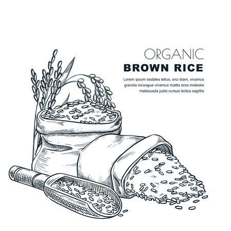 Rice label design template. Sketch vector illustration of cereal ears, wooden spoon and sack. Organic rice package background.