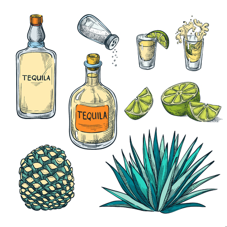 Tequila bottle, shot glass and agave root ingredients, vector color sketch illustration. Mexican alcohol drinks menu design elements. Ilustração