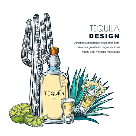 Tequila sketch vector illustration. Bar menu, label or package design. Bottle, shot glass, cactus, agave isolated on white background. Ilustração