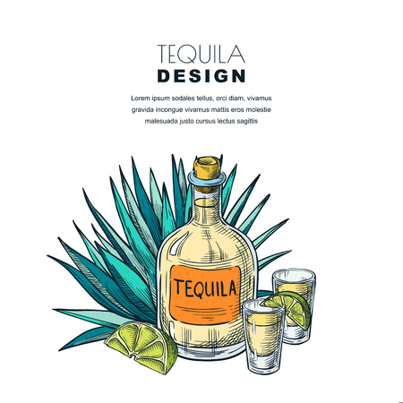 Tequila sketch vector illustration. Bar menu, label or package design. Bottle, shot glass, lime, agave isolated on white background