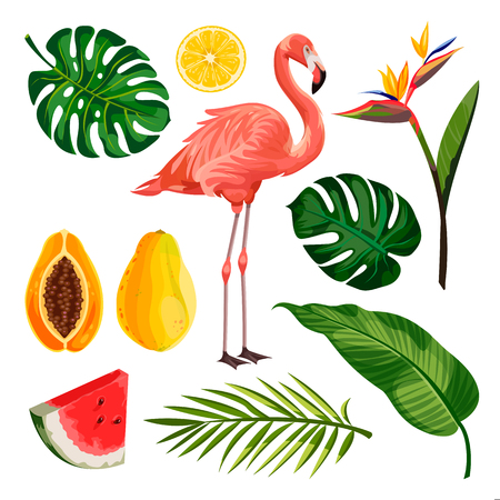 Summer tropical vector design elements set, isolated on white background. Cartoon illustration of flamingo, palm leaves and exotic fruits. Illustration