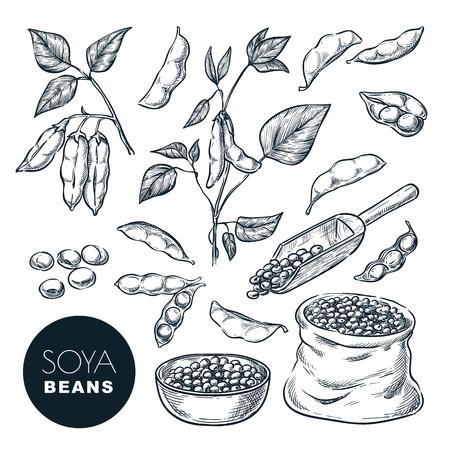 Illustration vectorielle de soja croquis. Graines de soja, gousse sur plante verte et graines en sac. Éléments de conception isolés dessinés à la main.