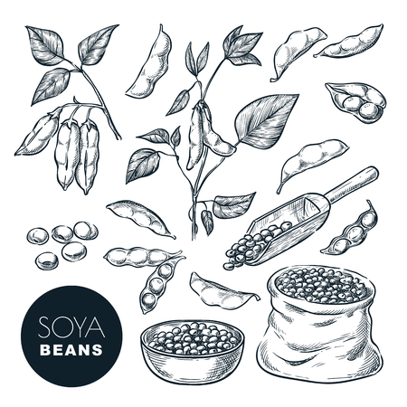 Soybean sketch vector illustration. Soya beens, pod on green plant and seeds in sack. Hand drawn isolated design elements. Illustration