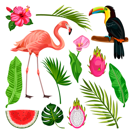 Summer tropical design elements set, isolated on white background. Vector cartoon illustration of toucan, flamingo, palm leaves and dragon fruit.