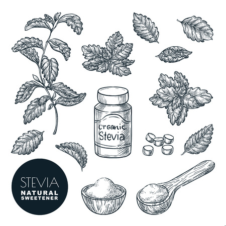 Stevia plant and leaves sketch vector illustration. Natural organic sweetener, sugar healthy alternative. Hand drawn isolated design elements.