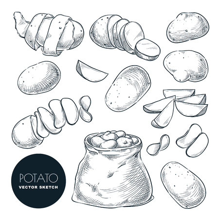Potatoes sketch vector illustration. Potato harvest in sack. Hand drawn agriculture and farm isolated design elements.