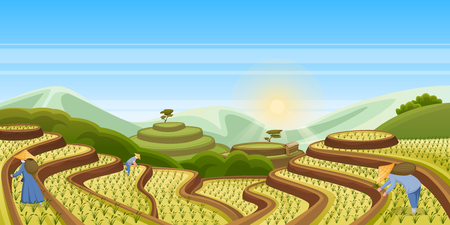 Rice terrace fields, vector cartoon landscape illustration. Asian harvesting agriculture horizontal background. China rural nature view. People harvest rice in field. Illustration