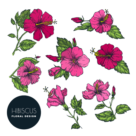 Tropical flowers set, vector color sketch illustration. Hand drawn tropic nature and floral design elements. Hibiscus isolated on white background.