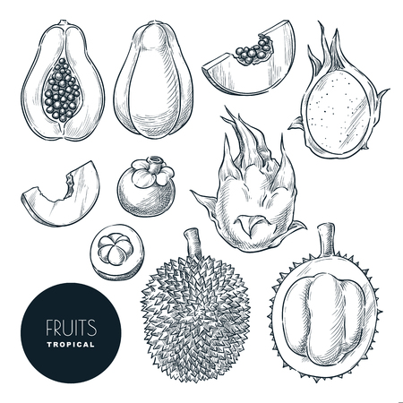 Tropical exotic fruits set, isolated on white background. Vector sketch illustration and design elements. Hand drawn tropic tasty eating products.
