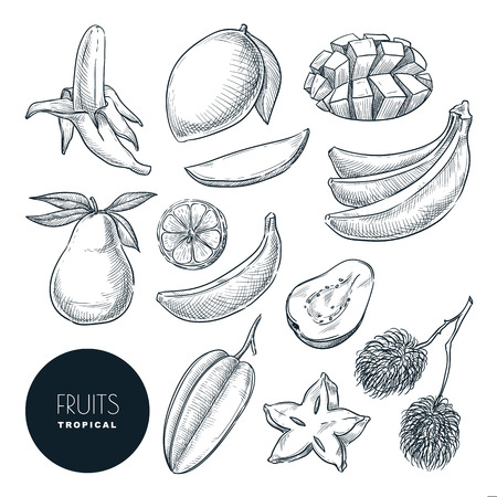 Bananas and other tropical exotic fruits. Vector sketch illustration. Hand drawn design elements and icons set. Natural tasty eating collection. Illustration