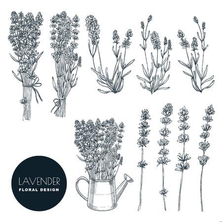 Ensemble de fleurs de lavande, illustration de croquis de vecteur. Bouquets dessinés à la main et éléments de design floral. Lavande isolée sur fond blanc. Vecteurs