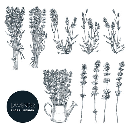 Lavender flowers set, vector sketch illustration. Hand drawn bouquets and floral design elements. Lavender isolated on white background. Vetores