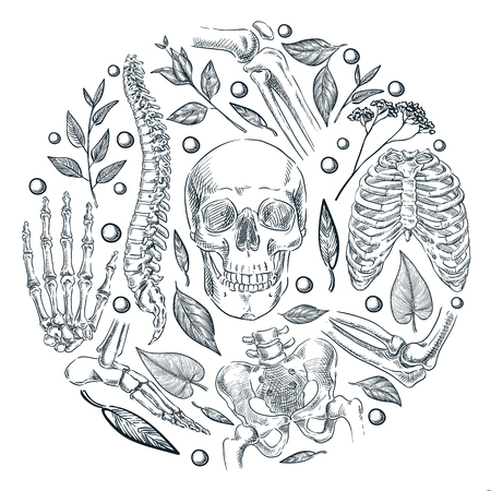 Human skeleton, bones and joints medical poster or label design template. Vector sketch illustration. Natural organic orthopedics treatment.