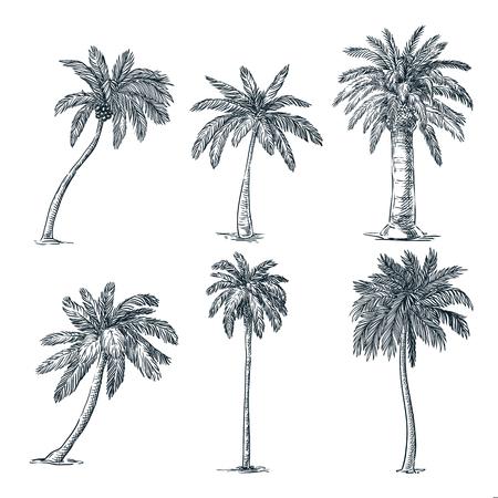Insieme di palme da cocco tropicale, isolato su priorità bassa bianca. Illustrazione di schizzo di vettore. Piante tropicali disegnate a mano ed elementi di design floreale estivo.