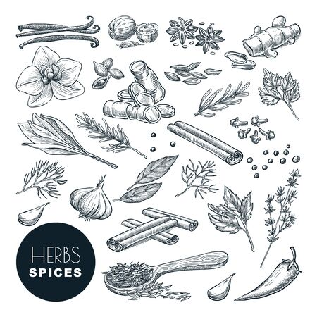 Spices and herbs set. Vector hand drawn sketch illustration, isolated on white background. Cinnamon, pepper, anise, clove, ginger, cooking icons and design elements.