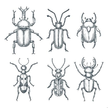 Bugs and beetles set. Vector sketch hand drawn illustration. Insects collection isolated on white background.