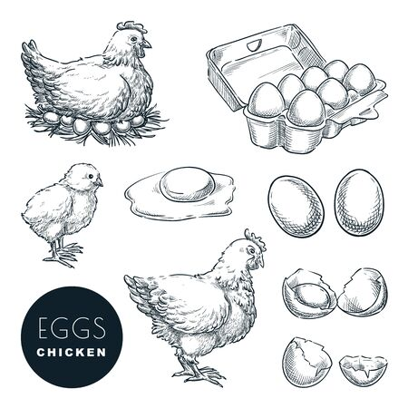 Chicken farm fresh eggs. Vector set of sketch design elements. Hand drawn hen, poultry and little chicken, isolated on white background.
