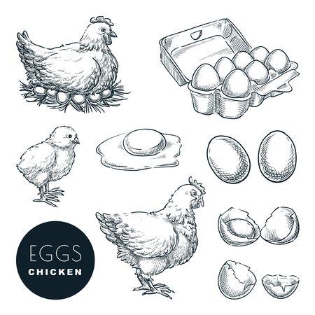 Oeufs frais de ferme de poulet. Ensemble de vecteur d'éléments de conception de croquis. Poule, volaille et petit poulet dessinés à la main, isolés sur fond blanc.