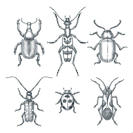 Beetles and bugs vector sketch illustration. Set of doodle hand drawn insects isolated on white background. Stock Illustratie