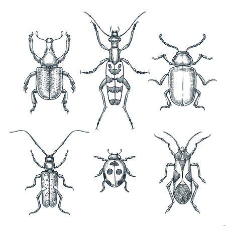 Ilustración de dibujo vectorial de escarabajos y bichos. Conjunto de insectos dibujados a mano doodle aislados sobre fondo blanco. Ilustración de vector