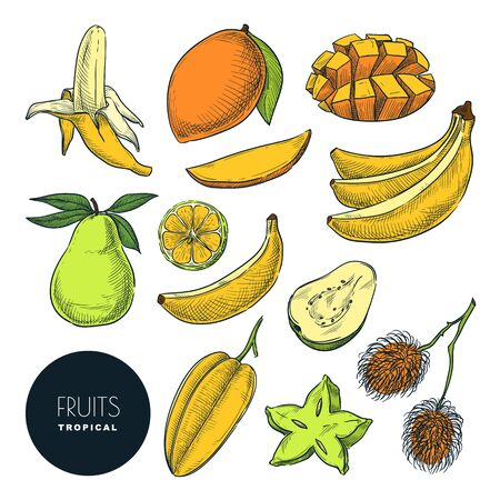 Bananas and other tropical exotic fruits. Vector color sketch illustration. Hand drawn design elements and icons set. Natural tasty eating collection.