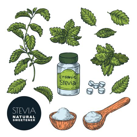 Stevia plant, leaves, powder and bottle pills. Vector sketch vintage color illustration. Natural organic sweetener, sugar healthy alternative. Hand drawn isolated design elements.