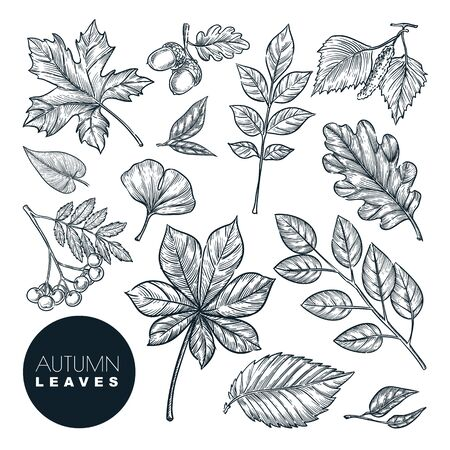 Autumn forest plants and leaves set, isolated on white background. Vector hand drawn sketch illustration. Fall nature design elements. Stock Illustratie