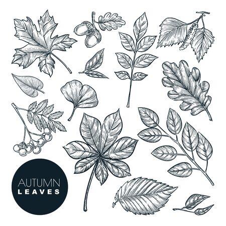 Conjunto de hojas y plantas de bosque otoñal, aislado sobre fondo blanco. Vector ilustración de boceto dibujado a mano. Elementos de diseño de la naturaleza de otoño.